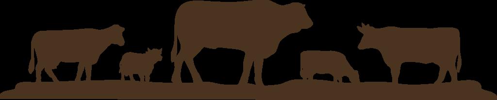 Сертификация продукции животноводства